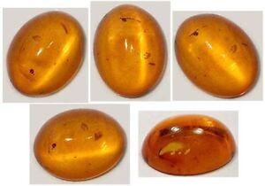 19thC Antique Baltic Cognac Amber Stone Age Magic Soul Egypt Etruria Sumer Greek