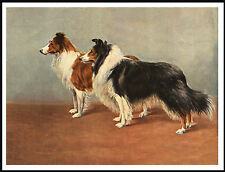ROUGH COLLIE TWO DOGS LOVELY VINTAGE STYLE DOG PRINT POSTER