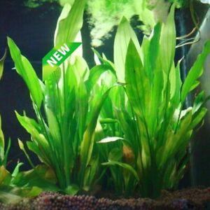 Plastic Aquarium Plants Fish Tank Decorations Artificial Grass Aquatic Ornament