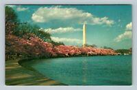 The Washington Monument, Cherry Trees In Bloom, Chrome Washington DC Postcard