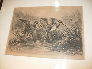 Original ROLAND CLARK Pencil Signed DRYPOINT Sport Etching - ENGLISH SNIPE 1925