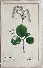 ALNUS GLUTINOSA ONTANO NERO COMMON ALDER SWITZERLAND 1843 ROMER ALBERI TREES