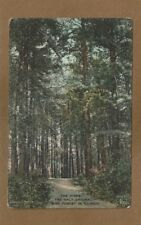 THE PINES, Only Original Pine Forest in Illinois, used Champaign 1912