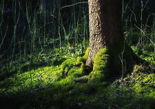 Moss Forest Tree Home Decor Canvas Print A4 Size (210 x 297mm)
