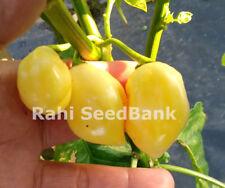 Trinidad Congo Peach - A Rare, Extreme Hot & Smoky Flavoured Chilli - Oz Grown