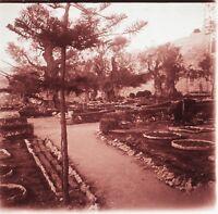 Gerusalemme Giardino Dei Oliva Terra Sainte Foto Placca Lente Stereo 1935s