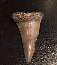 Fossil Mako Shark Tooth, Megalodon era