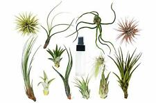 Tillandsia Air Plant Variety w/ Spray - 9 Pack