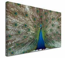More details for rainbow feathers peacock x-large 30