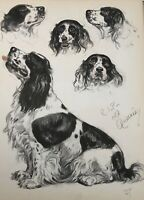 Diana Thorne's Dogs 1944 English Springer Spaniel Lithograph Print Portrait