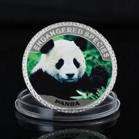 WR Gefährdete Spezies Panda Silber Gedenkmünze in Münzkapsel in Farbe