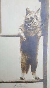 ANTIQUE VINTAGE PETER THE WALKING CAT KITTY FELINE FRIENDS ADOPT ME FUN PHOTO