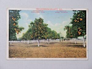 Vintage Advertising Postcard Richardson-Kellett Co. An Orange Grove 1914 9053