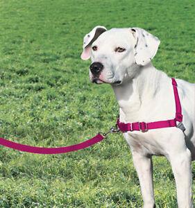 Premier/Petsafe Easy Walk Harness Stop dogs pulling Medium size