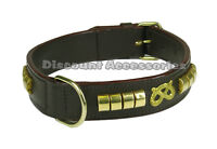 STAFF LEATHER DOG COLLAR PADDED STAFFORDSHIRE BULL TERRIER STAFFY STAFFIE BROWN