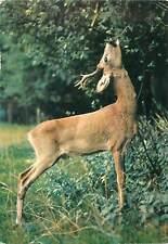 Wild animals postcard Deer feeding