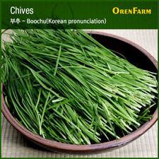 2500 Garlic Chive Seeds Korean Buchukimchi Allium Tuberosum Seeds 부추au