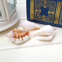 20 pcs Natural Sea Shells Conches Seashells Beads Craft Decor Beach Fish Tank