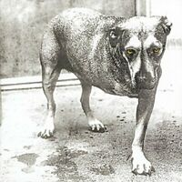 Alice In Chains - Alice In Chains [CD]
