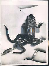 1957 Photo Boston MA Six Leg Frog Hexapod Frank Tuttavilla Museum Science