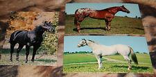 3 Vntg Horse Postcard Lot Rancher Sam, Fair Charles, Black Jack Straw Stallion