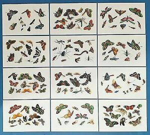 Set of 12 NEW Chinese Botanical Insects Set 2 Postcrossing Postcardsofkindness