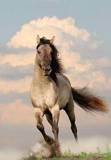 Wild Stallion Horse Running at Sunset Animal Nature Art Poster 18'' x 28''
