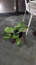 Bromeliads Plant Flower
