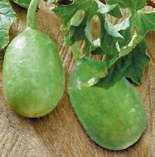 Liso Calcutta Cucumber - 10+ seeds - GREAT and FINE!