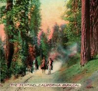Vtg Postcard 1910s California Park CA The Sentinel Marin County Acmegraph UNP