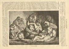 Monkey, A Family Picture, In The Zoo, Vintage 1872 French Antique Art Print,
