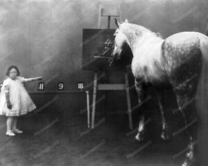 Math Horse Able To Perform Arithmetic 8x10 Reprint Of Old Photo