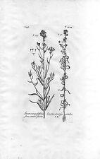 Dillenius - incisione su rame originale del 1732, Linaria