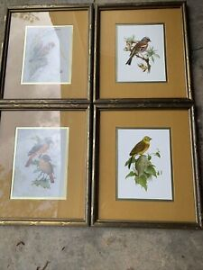 Lot Of 4 12 X 14 Bird Prints Matted And Framed Mid Century Murr 1958