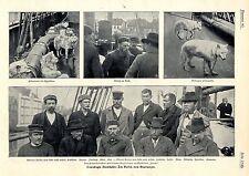 Rückkehr des Polarforschers Otto Sverdrup an Bord der Fram Hafen Stavanger 1902