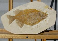 EXTINCTIONS- LARGE PREDATORY Phareodus FOSSIL FISH with SHARP TEETH - FREE SHIP!