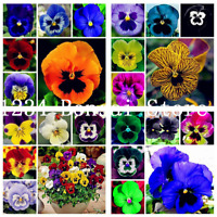 100 Pcs Seeds Mixed Color Flowers Pansy Bonsai Wavy Viola Tricolor Bright NEW X