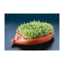 Cress Hedgehog by ROEMERTOPF Watercress Kit