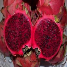 Exotic Bonsai Dragon Fruit Pitaya Seed Tropical Succulent Fruit Plant 20 Pcs/bag