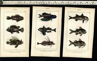 Fish Poissons c.1830's nice display collection 10 fine old hand colored prints A