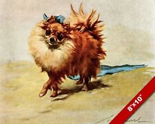 THE FANCY MINI POMERANIAN PET PUPPY DOG ART PAINTING PRINT ON REAL CANVAS