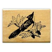 Bird Stamps Mounted Rubber Stamps Birds Bluejay Rubber Stamping Blue Jay