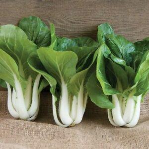 BOK CHOY WHITE STEM 100+ Seeds HEIRLOOM Vegetable Garden buk pak choi COLD HARDY