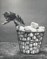 Chat et Poussin © SPILLMAN & RAMSAY 1960