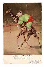 Vintage Postcard Roosevelt Bears At The Circus Anthropomorphic Dressed giraffe