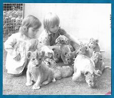 EARLY 1970'S B/W PRESS PHOTO CHILDREN WITH LION CUBS BORN AT WINDSOR SAFARI PARK