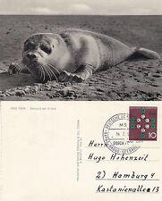 NAVE PASSEGGERI TEDESCA MS Gorch Fock un Navi inseriti nella cache cartolina con un walruss