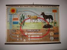 ITALY PARAVIA BOVOLO HERBIVORES CARNIVORES ANIMAL SCHOOL MAP MAPPA CARTE KARTE