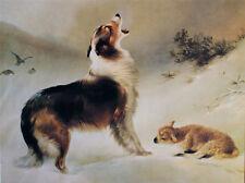 Found by Albrecht Schenck Collie Dog Lamb Animal 12x16 Open Edition Paper Print