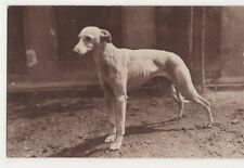 Whippet, Les Races Canines, France RP Postcard, B268